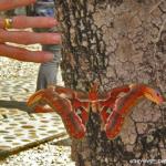 Spectacular moth