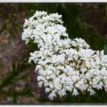 Wildflowers in spring