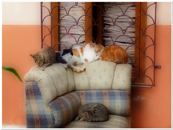 Make room for me! - Ayvalik, Turkey