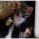 Kittens at Rhodes, Greece.
