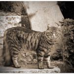 Guarding the Lemon Groves - Limone, Italy