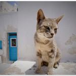 In The Greek Islands - Santorini, Greece